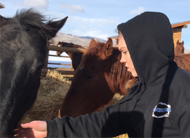 Kya Culter working with horses