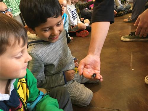 students go to the bug zoo
